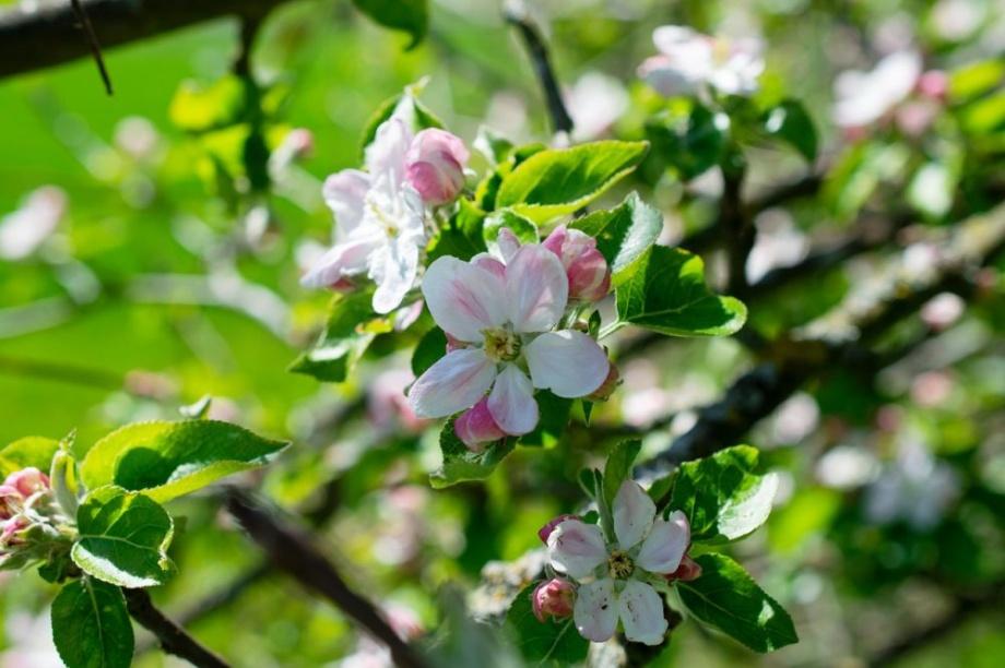 fehér virágzás az erekció során gyenge merevedést akarok, de nem tudok