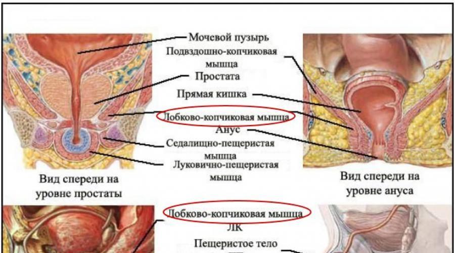 kegel gyakorlat és erekció