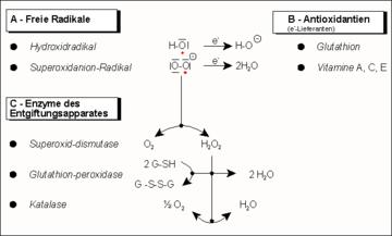 nitrogén-monoxid-erekció