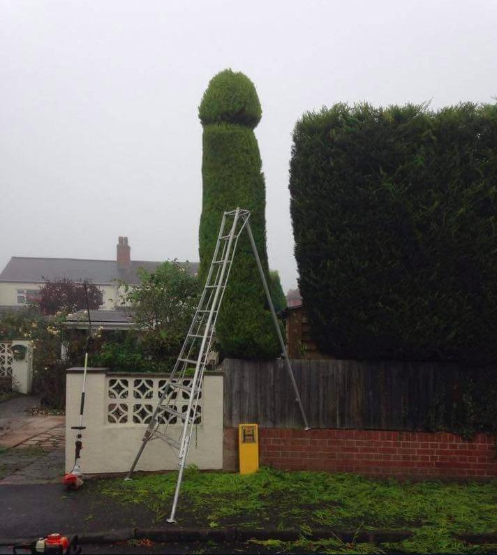 növényi pénisz