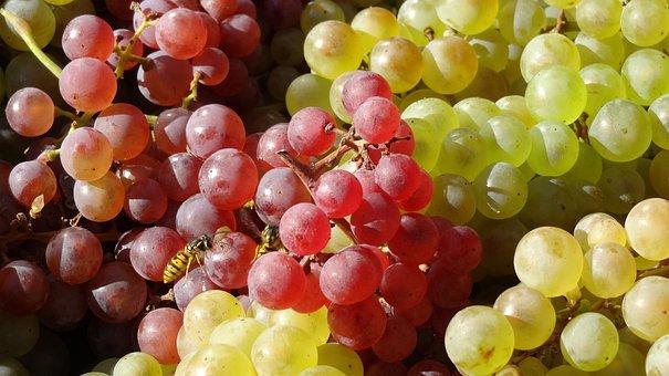 szőlő és erekció)