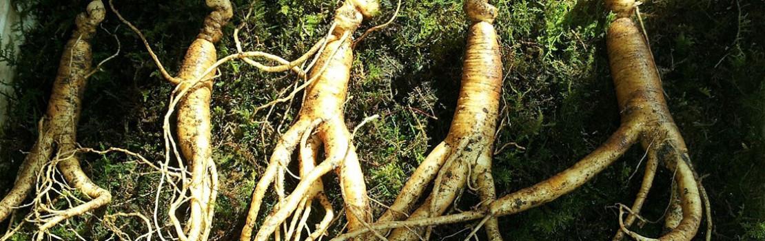 gyógynövények, amelyek javítják az erekciót hosszan tartó merevedés mi ez