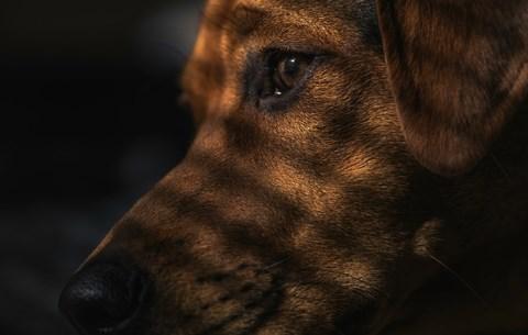 A kutyám elkezdte nyalogatni a sebemet: döbbenetes, ami a lábammal történt - Blikk Rúzs