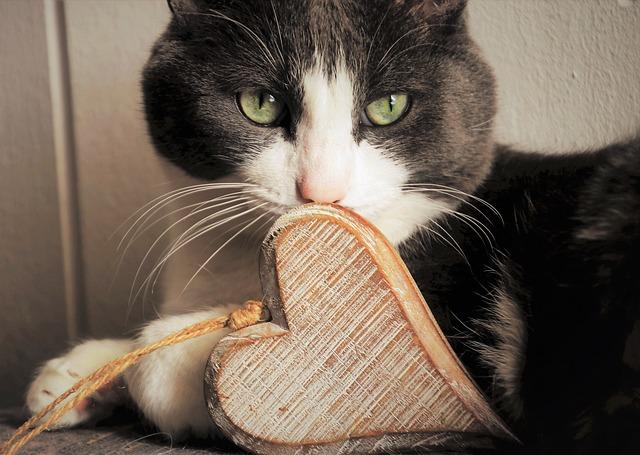 Mit tegyünk, ha náthás a macskánk? - HáziPatika