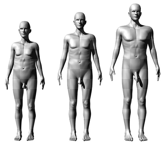 a magasabb férfiaknak nagyobb a péniszük