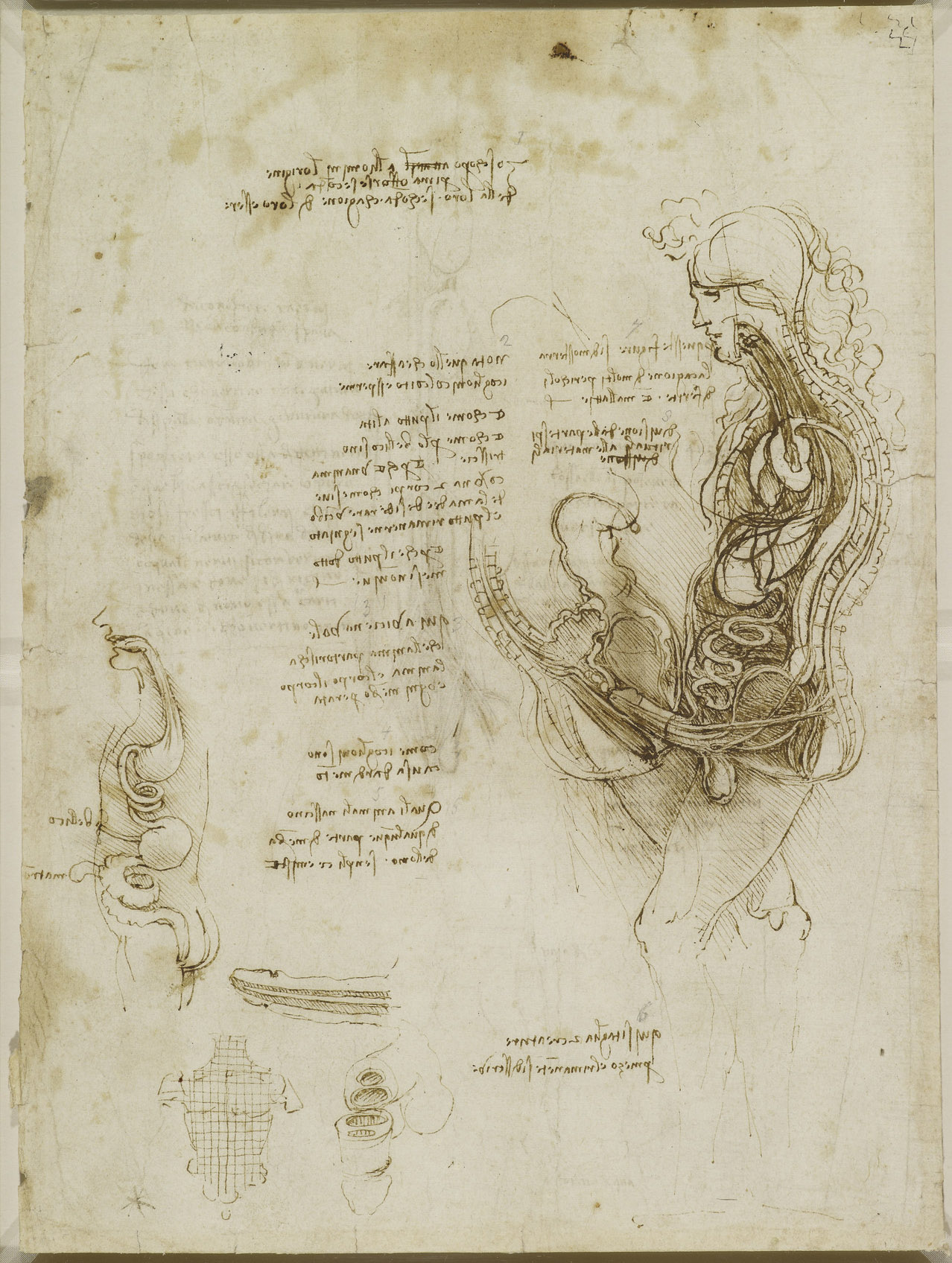 Leonardo da Vinci és a pénisz szabad akarata