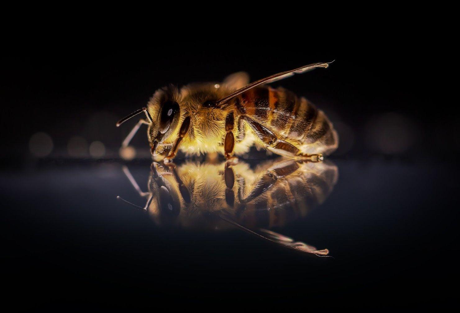 miért teszik a méheket a péniszre)