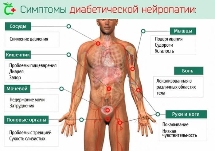 perineális izom erekció