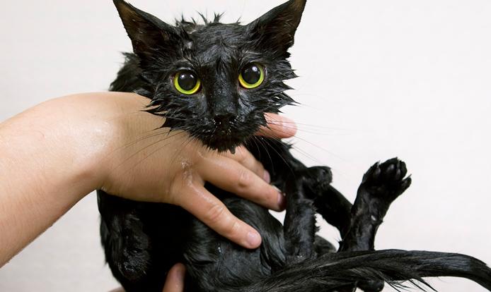 Hogyan etessük a macskát ivartalanítás után? - HáziPatika