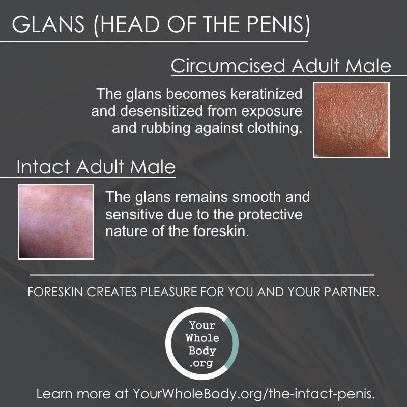 a smegma felhalmozódása a péniszben
