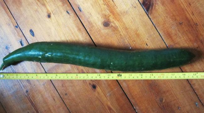 akinek a leghosszabb pénisze van