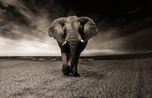 állati állati képek