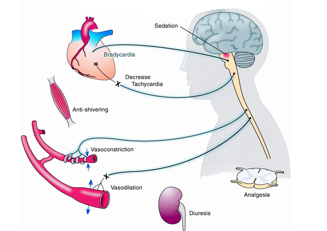 Vitaminok a prosztatagyulladás címére