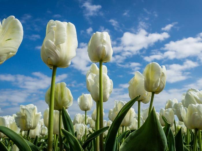 fehér virágzás az erekció során)