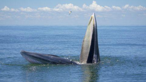 Gigantikus méretű bálnapéniszt kaptak lencsevégre - Ripost
