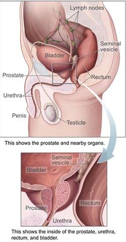 erekcióval a prosztata fáj