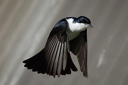 mely madaraknak van péniszük)