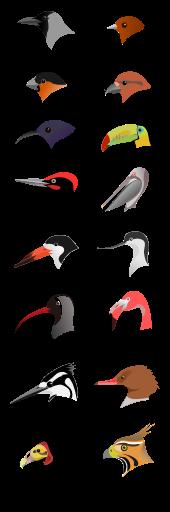 A madarak hogyan szaporodnak?