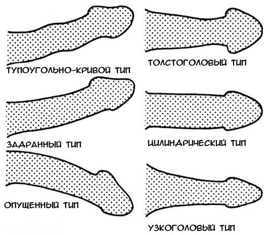 különböző típusú pénisz