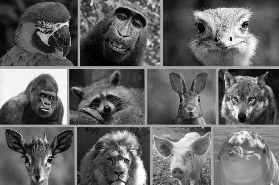 21 állat, akik másnak gondolják magukat – vicces képek