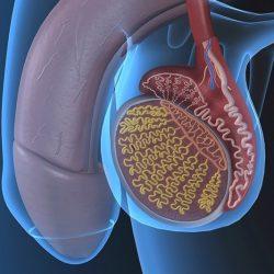 prosztatagyulladás hiányzik az erekció