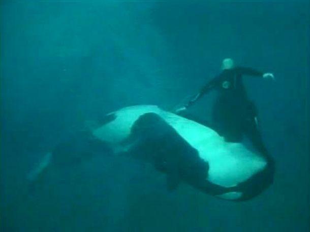 gyilkos bálna pénisz