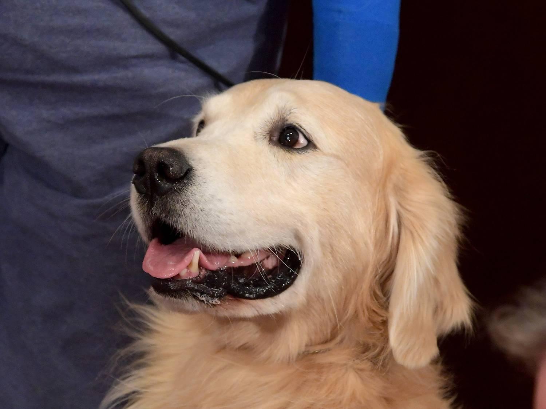 a kutyám megnyalta a péniszemet