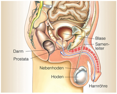 urethritis symptome)