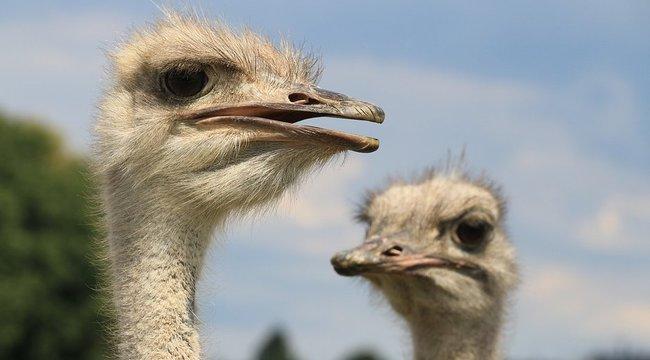 Elvesztik péniszüket a madarak – de miért? | hu