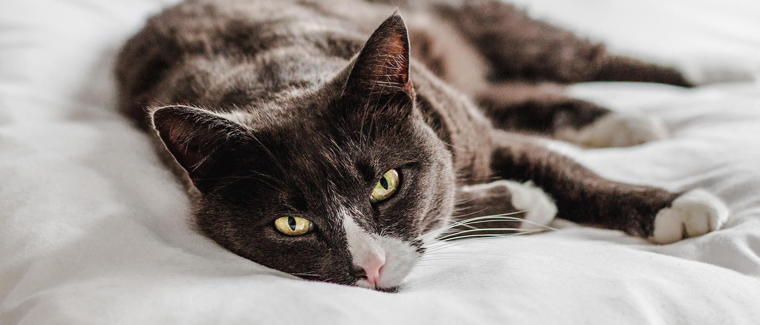 mi van, ha a macskának merevedése van