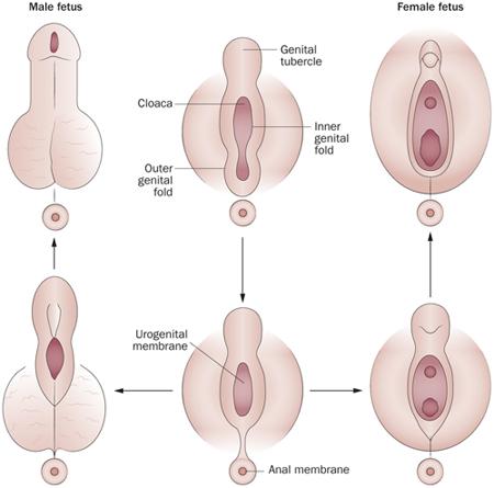 nők pénisz miért)