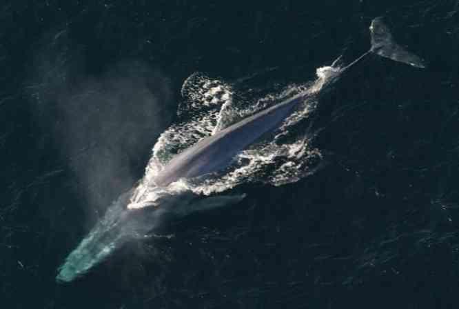 bálna pénisz mérete)