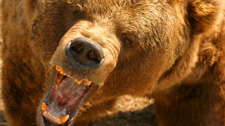 Eltörhet a jegesmedvék nemi szerve a környezetszennyezéstől