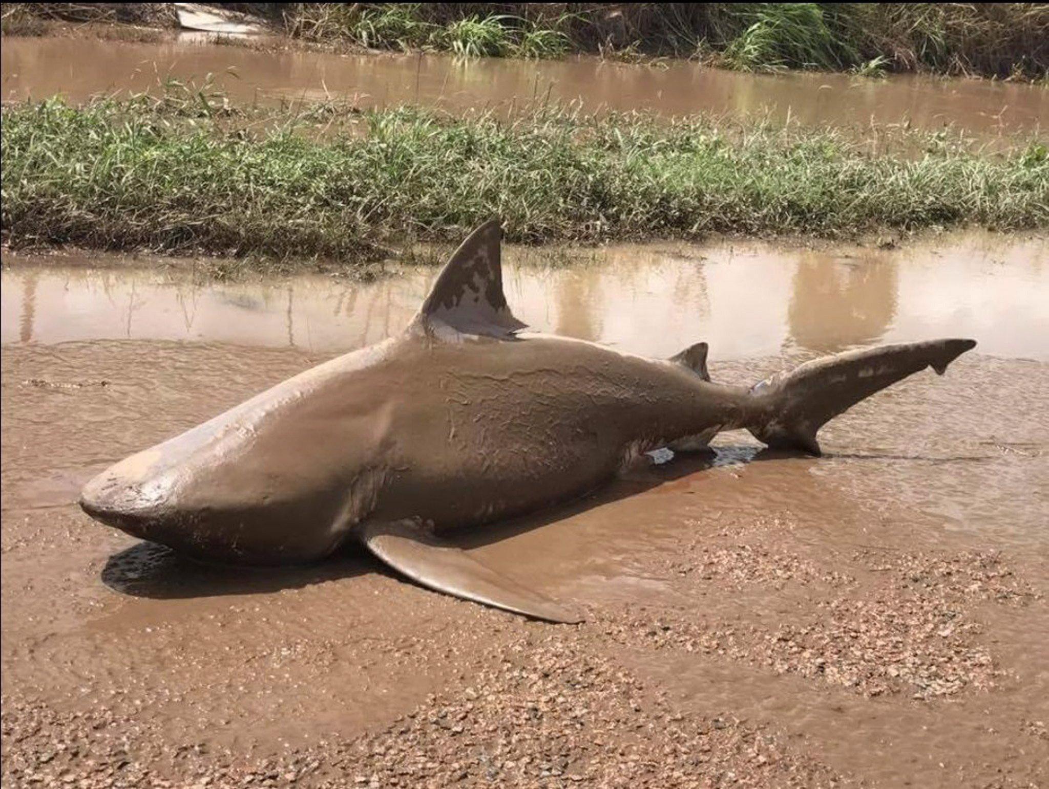10 dolog, amit nem tudtál a cápákról-tízdolog
