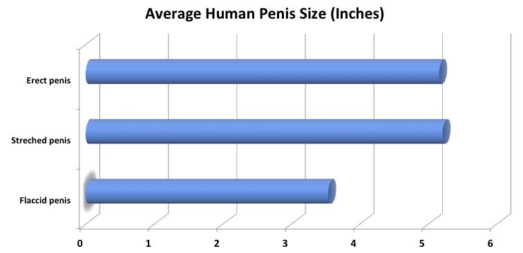 Így változik a pénisz a korral