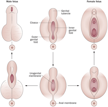 merevedési inkontinencia férfiaknál akinek nincs reggeli merevedése