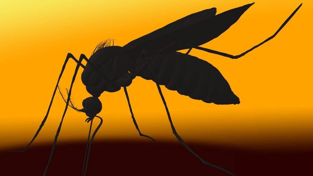 van-e pénze a szúnyognak